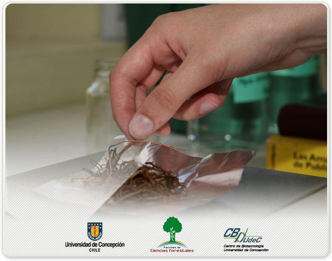 Patología Forestal Galería Fotográfica