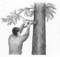 Señal en un árbol