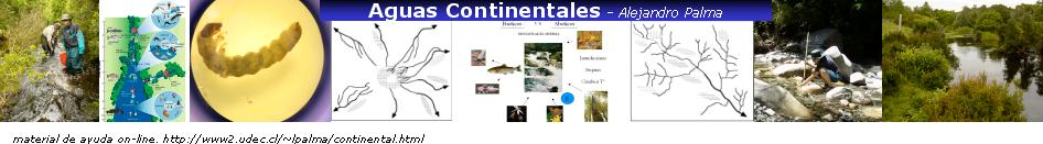 Ecologia fluvial
